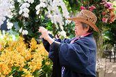 Old Elder Woman Taking Flower Photo In Garden. Asian Elderly Female Relaxing Outdoors. Senior Leisur poster