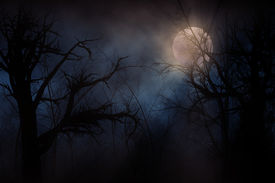 stock photo of crescent-shaped  - Illustration of night forest alight with bright moon in clouds - JPG