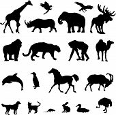 stock photo of the hare tortoise  - Set Of 20 Animal Black Vector Silhouette Illustration - JPG