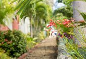 stock photo of thomas  - Ninety nine steps framed by red flower blossom in Charlotte Amalie St Thomas - JPG