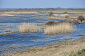 Hamford Water Essex