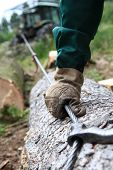 Lumberman Pulls A Log From The Forest