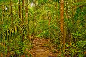 Primitive Trail In The Rain Forest
