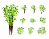 A Set Of Isometric Yucca Tree Or Dracaena Plant