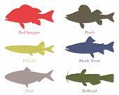 North American Food Fish
