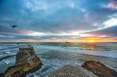 stock photo of gannet  - Muriwai Gannet Colony at sunset, Gannets nesting on the rocks below.