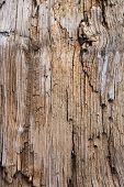 Beach drift wood log texture.