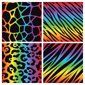 stock photo of girly  - A collection of four different rainbow colored animal print backgrounds - JPG