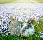 Two rabbit in garden