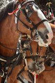 Horses Close Up