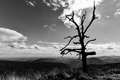Dried tree silhouette in black and white - Shenandoah National Park, Virginia USA