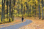 Winding asphalt road with autumn foliage - Shenandoah National Park, Virginia United States