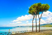 Pine Tree Group On The Beach And Sea Bay Background. Punta Ala, Tuscany, Italy