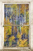 Aspen Tree Magic Cottonwood Pass White Farm House Window Portrait View