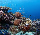 Vivid coral reef with marine creatures