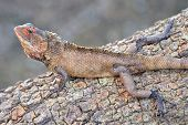 Chameleon camouflaged on tree