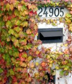 Picture of ivy-covered mailbox.
