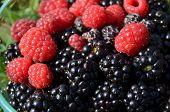 Black berries and Raspberries