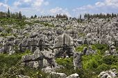 Stone Forest National Park In Yunnan Province