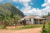 Typical rustic wooden house at the Vinales Valley in Cuba with the mountains just behind the house
