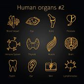 Set of otlines yellow icons with human organs