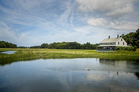 image of marshes  - Essex Salt Marsh  - JPG
