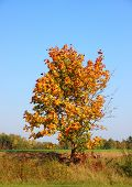 Single Autumn Tree On Hill Top With Fresh Color