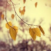 Vintage Autumn Leaves On Tree