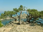 Tree and lagoon in Crimea