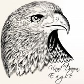Hand Drawn Vector Eagle Close Up