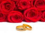 Wedding rings and roses isolated on white background