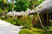 Bungalows in jungles - sand pathway, flowers and trees