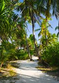 Pathway in tropical jungle, abstract travel background