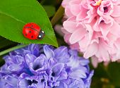 Toy ladybug and flowers, abstract nature background