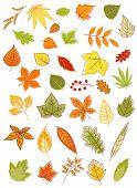 Colorful autumn leaves set