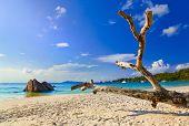Beach Anse Lazio at island Praslin, Seychelles - vacation background