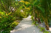 Bungalows on beach and sand pathway, flowers and trees