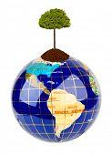 Globe and tree isolated on white background