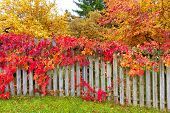 Colorful garden in autumn