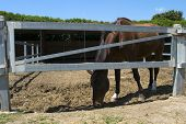 foto of thoroughbred  - a manege of horses with some thoroughbreds - JPG