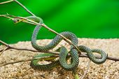 Green snake in terrarium - animal background