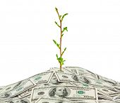 Money and plant isolated on white background