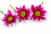 Three flowers - isolated on white background