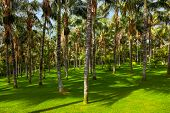 Palms at Tenerife Canary - nature travel background