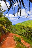Pathway in jungles, Vallee de Mai, Seychelles - travel background
