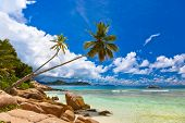 Palms on tropical beach - Seychelles - nature background