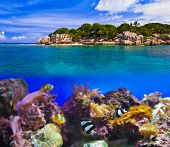 Tropical island and fishes - vacation nature background