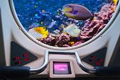 Fishes in submarine window - underwater marine life