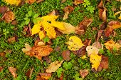 Leaves On The Green Grass