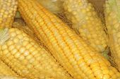 Cobs Of Corn Cooking In Water Closeup